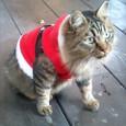 サンタさんになりました