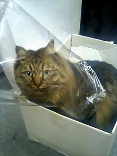 箱&袋猫という生き物がいるらしい。。。